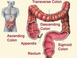 colon1-530x400-300x226