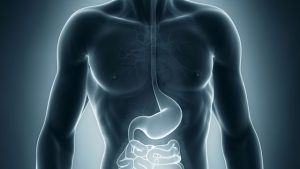 stomaco_intestino